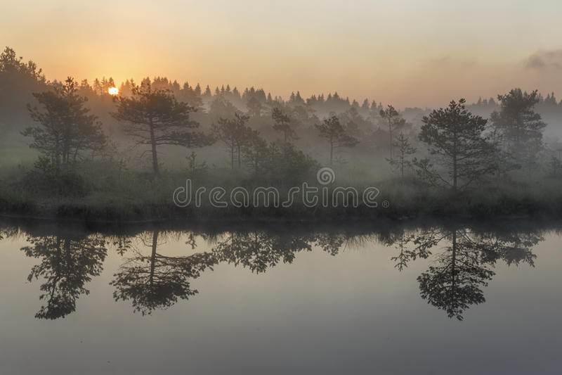 Sunrise in the misty bog during summer stock photography