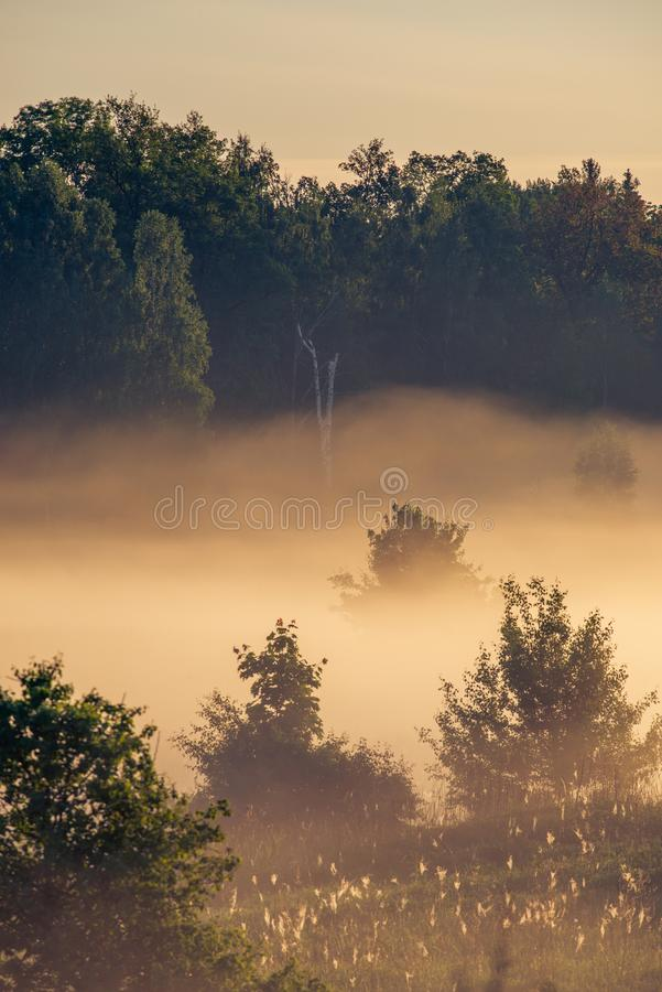 Sunrise misty landscape at sunrise royalty free stock images