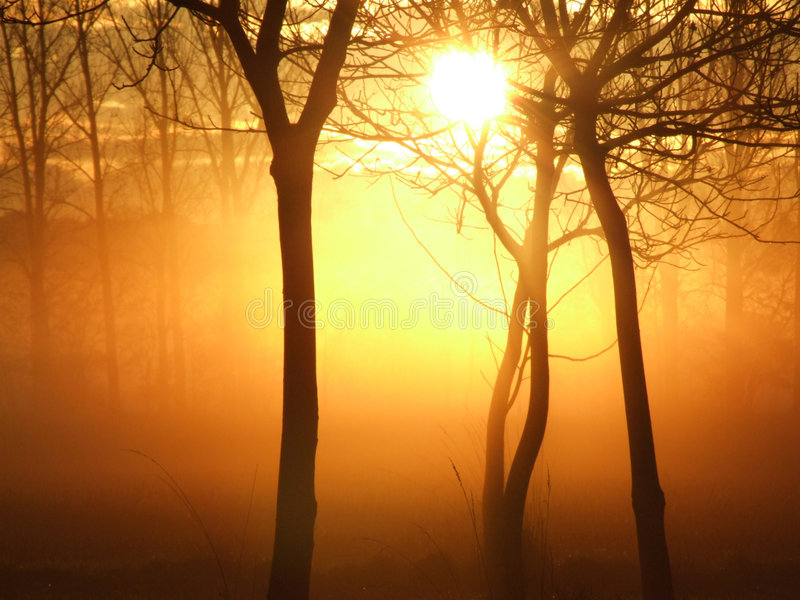 Download Sunrise on a misty morning stock image. Image of park - 2468525