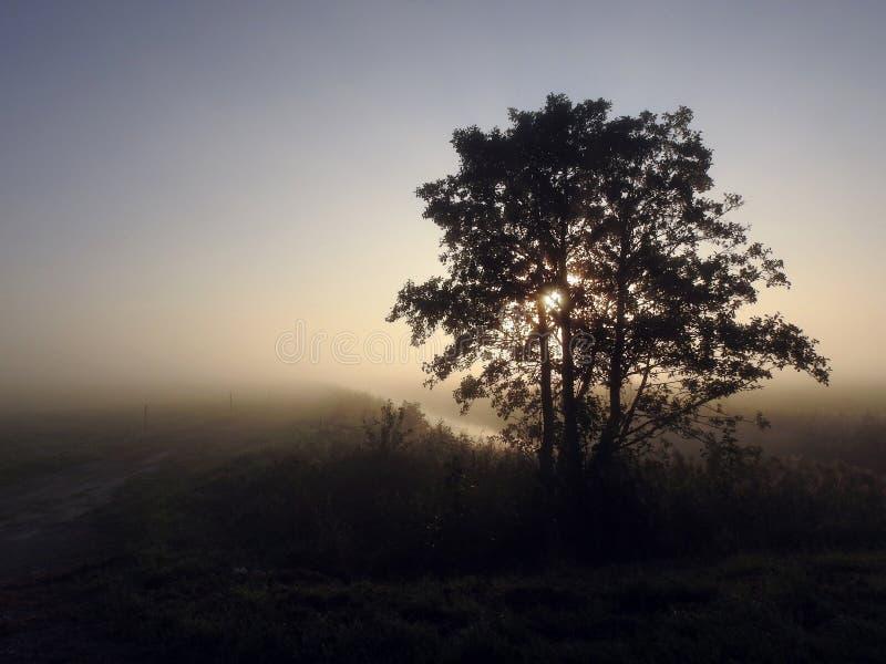 Sunrise , fog and beautiful trees, Lithuania stock image