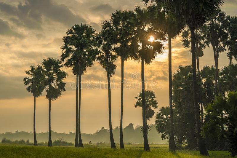 Sunrise in the morning at rice field royalty free stock photo