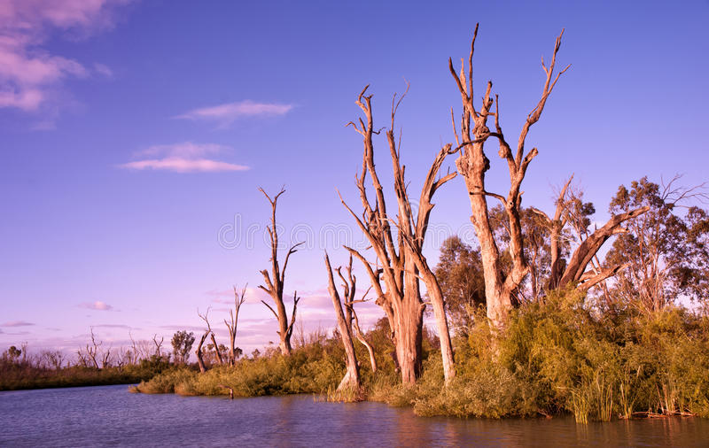 Sunrise On The Murray River Stock Image