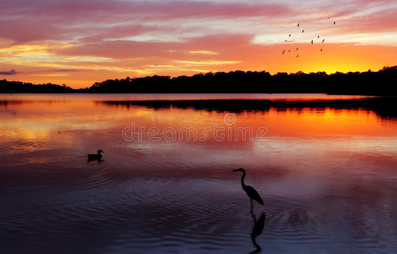 Sunrise Narrabeen Lakes. Magnificent sunrise and reflections at Narrabeen Lakes, NSW Australia royalty free stock photos