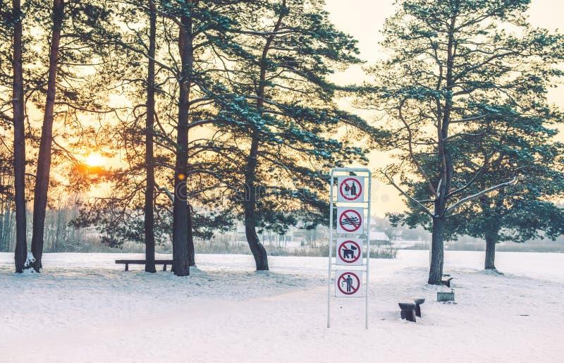 Sunrise near lake, pine park royalty free stock photos