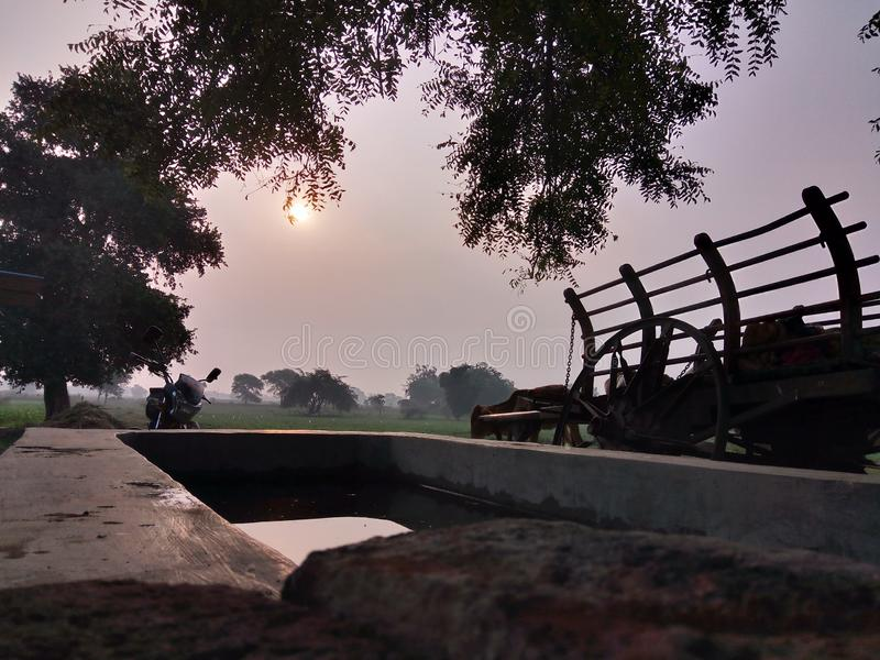 Sunrise with nice golden color and water reflection and bullock cart royalty free stock photography