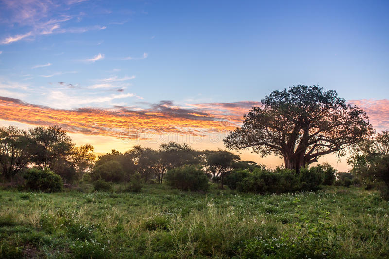 Download Sunrise Over African Savannah Stock Photo - Image: 36691674