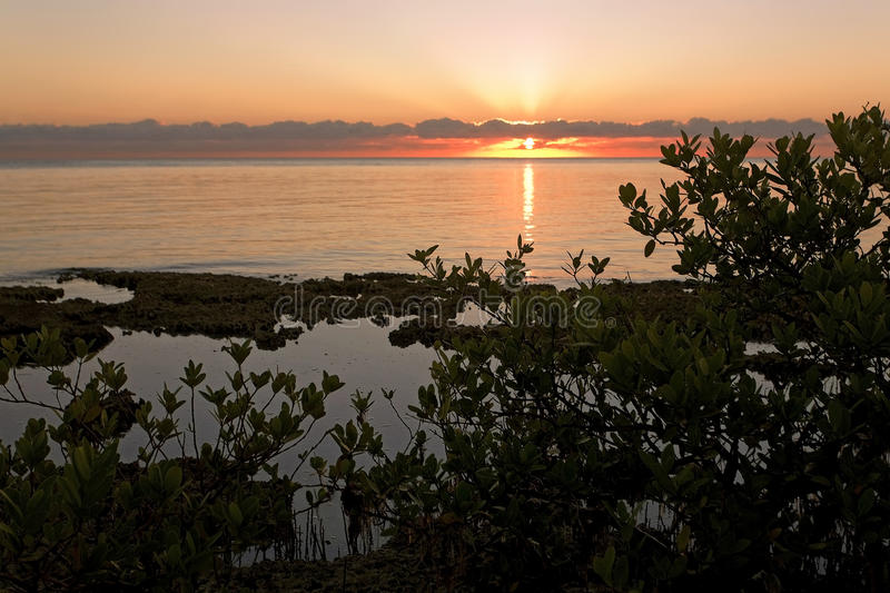 Sunrise over Caribbean Sea and Mangroves royalty free stock image