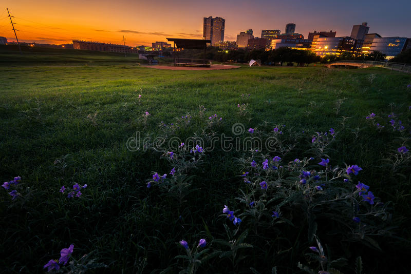 Sunrise Over Downtown Fort Worth. Stunning summer sunrise over a large field containing meadow pink wildflowers fronting downtown Fort Worth, TX royalty free stock photos