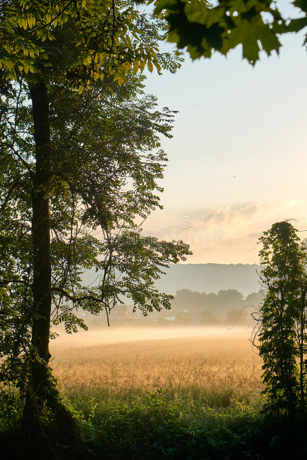 Sunrise over a grainfield with fog. Vivid colors with dramatic clouds. Bayreuth, Germany. Vertical. stock photography