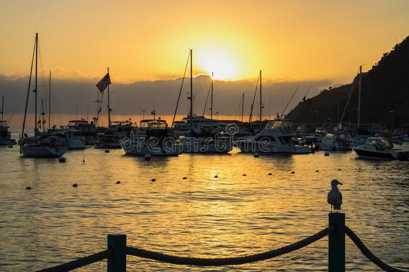 Sunrise over Harbor with Boats and Flag and Seagull in Profile o stock photo