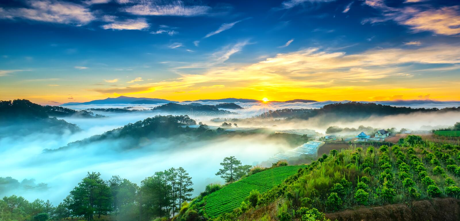 Sunrise over hillside as the sun rising from horizon reflect light bright yellow sky. Below cloudy mist covered valleys flooded pine forests create impressive royalty free stock image