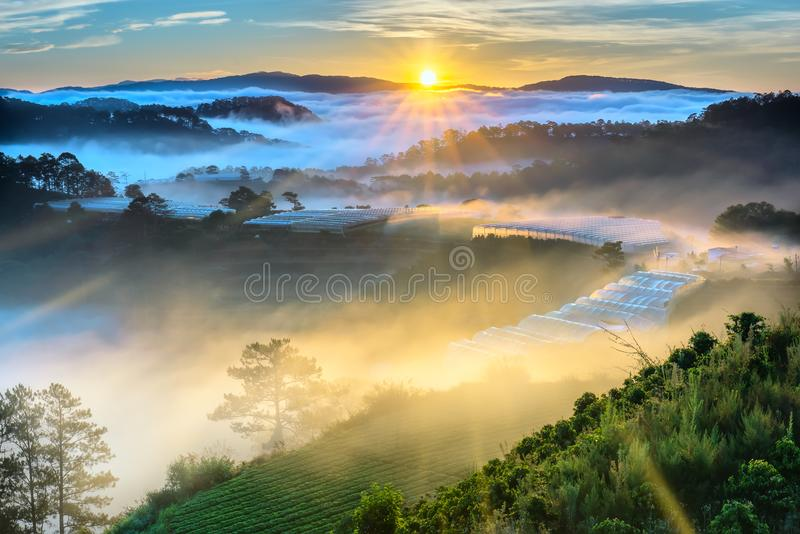 Sunrise over hillside as the sun rising from horizon reflect light bright yellow sky. Below cloudy mist covered valleys flooded pine forests create impressive royalty free stock photo