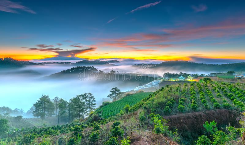 Sunrise over hillside as the sun rising from horizon reflect light bright yellow sky. Below cloudy mist covered valleys flooded pine forests create impressive stock images
