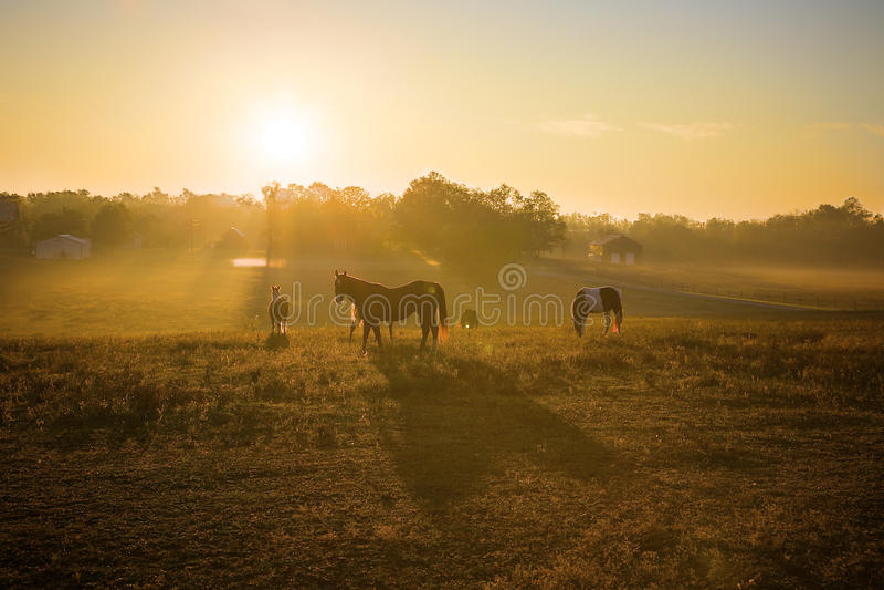 Download Sunrise Over Horses stock illustration. Illustration of grass - 28556555