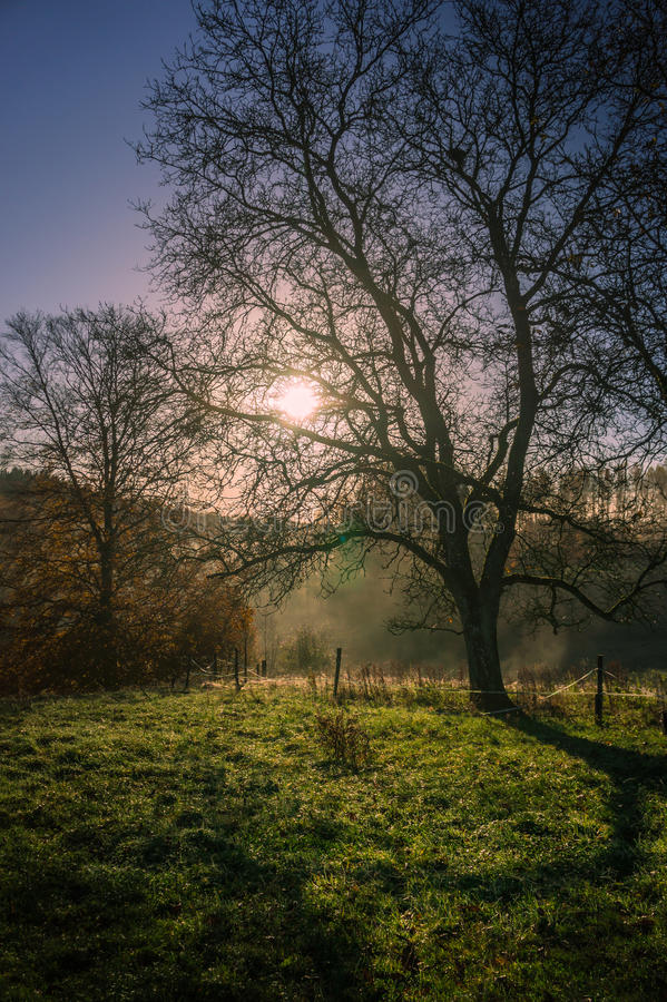 Sunrise over the morning dew royalty free stock image