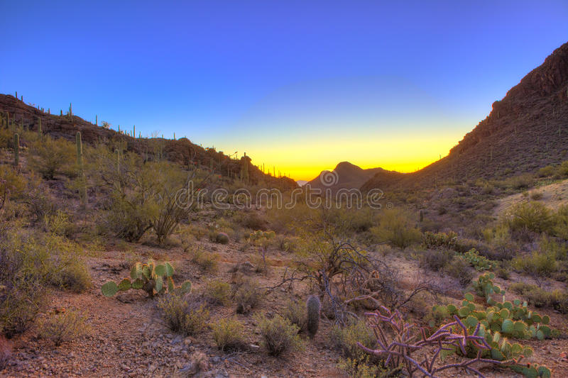 Sunrise over the sonoran desert