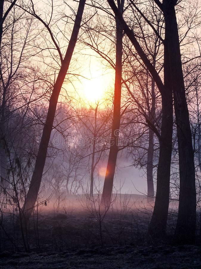 Sunrise over the trees in the forest. Trees in the morning haze. Landscape of morning fog in the bare dark forest royalty free stock photo