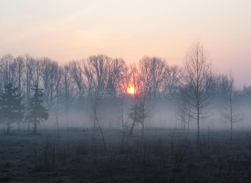 Sunrise over the trees in the park. Trees in the morning haze. Empty park benches. Landscape of morning fog in the bare dark forest stock photos