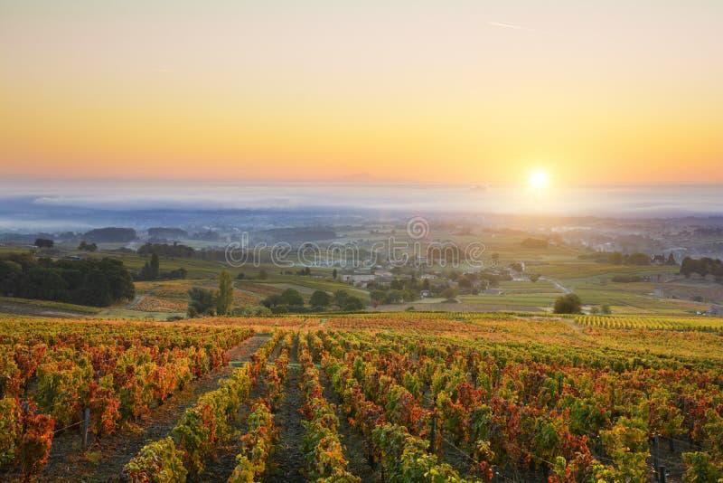 Sunrise over vineyards of Beaujolais during autumn season royalty free stock photo