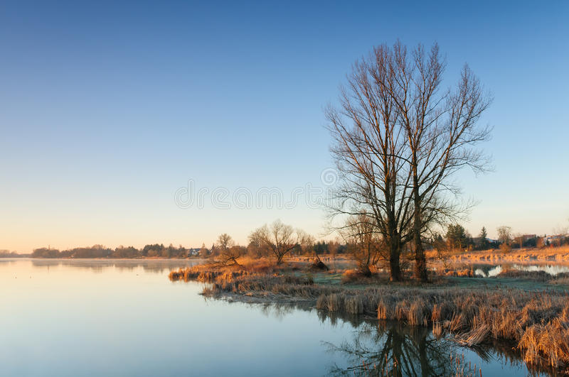After sunrise over a wild pond with lonely trees next to a village.  royalty free stock photos
