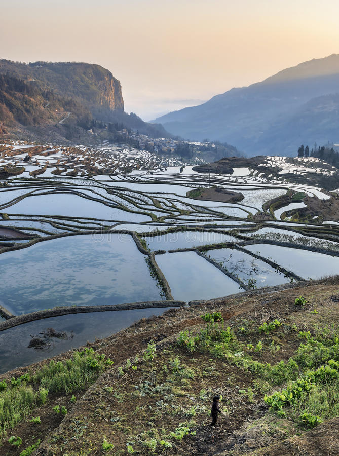 Sunrise over YuanYang rice terraces in Yunnan, China, one of the latest UNESCO World Heritage Sites.  royalty free stock photo