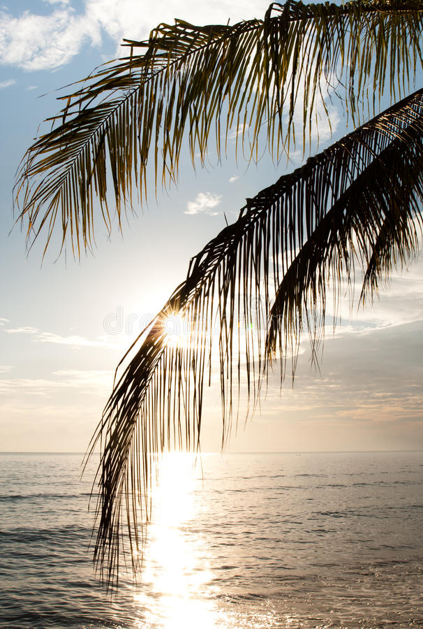 Download Sunrise and palm tree stock photo. Image of vertical - 15598108
