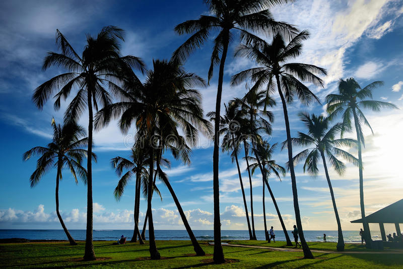 Sunrise with palm trees in Salt Pond Beach Park royalty free stock photo