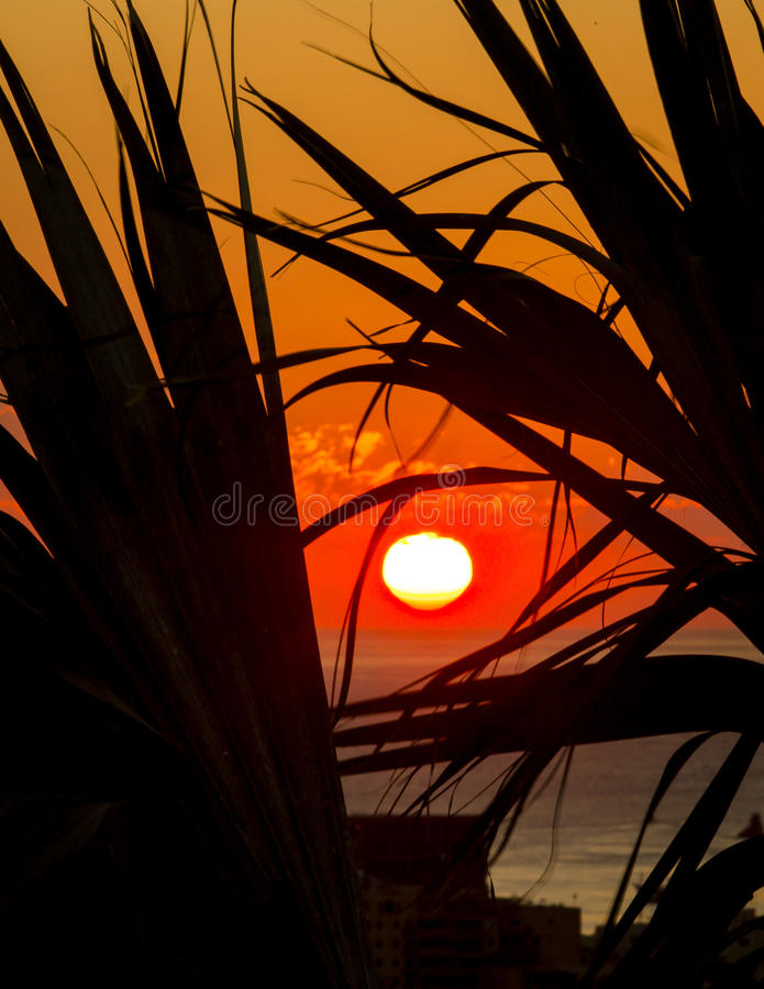 Sunrise through the Palms XX royalty free stock image