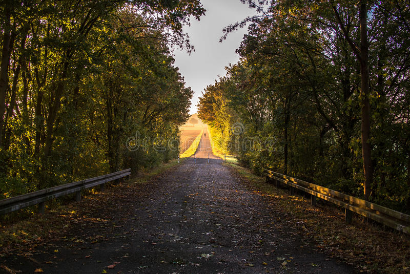 Sunrise Path. A path exiting the shadow of some trees into a meadow, brightly lit by the rising sun in yellow and golden colors stock image