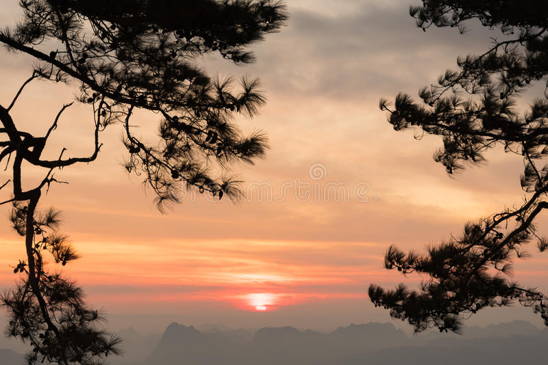 Sunrise through pine branches on the morning stock photos