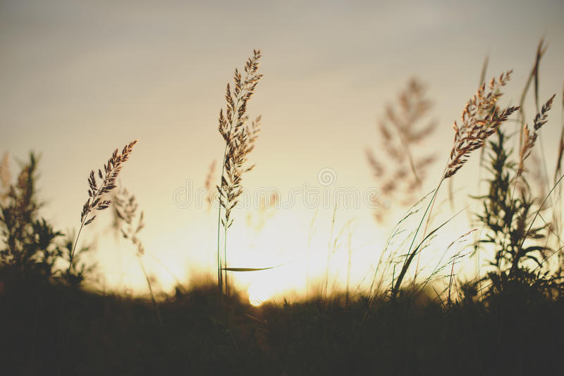 Sunrise plant silhouette in front of the sun royalty free stock images