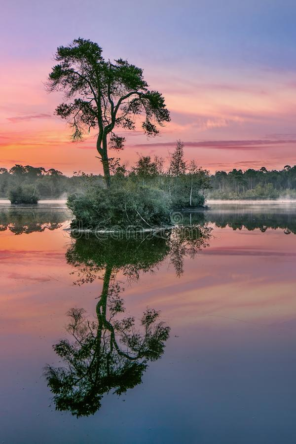 Sunrise reflected in a lake in a forest, South of The Netherlands. Sunrise reflected in a lake in a forest in the South of The Netherlands royalty free stock photos