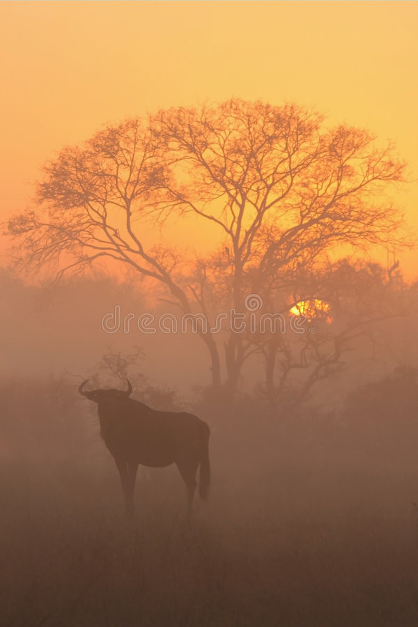 Download Sunrise In Sabi Sands Royalty Free Stock Photos - Image: 5512818