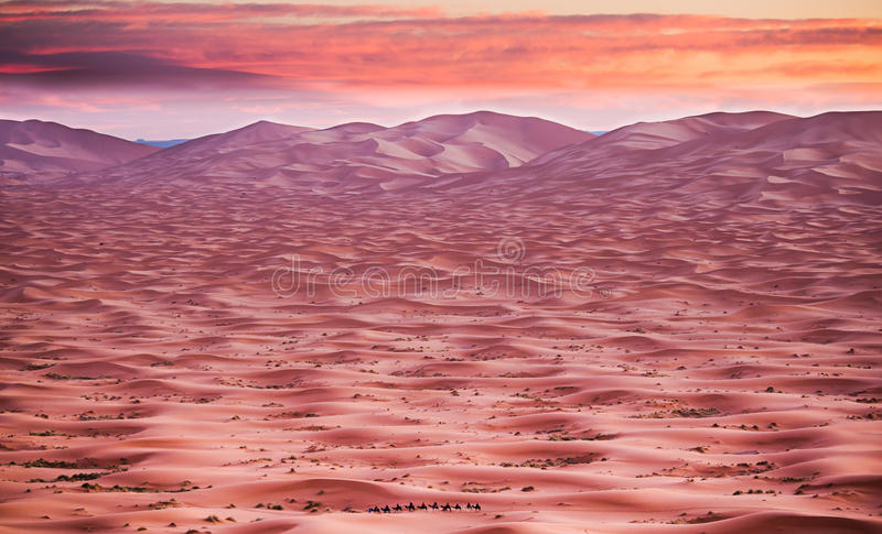 Sunrise in the Sahara Desert royalty free stock photography