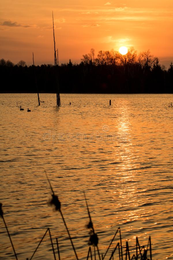 Sunrise Scene At Island Lake Conservation Area. The sun pops over the treeline at sunrise at the eastern end of Island Lake Conservation Area in Orangeville royalty free stock images
