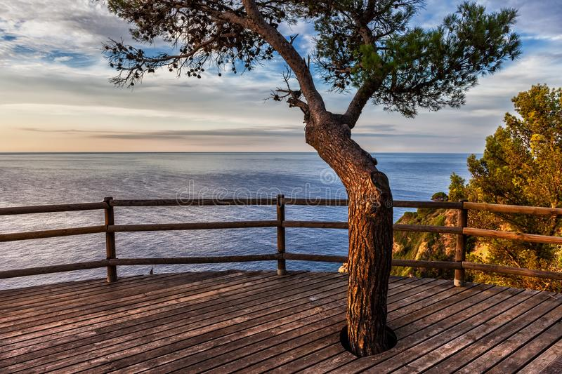 Sunrise On The Sea. From a viewpoint terrace with a tree in Tossa de Mar on Costa Brava, Catalonia, Spain royalty free stock photography