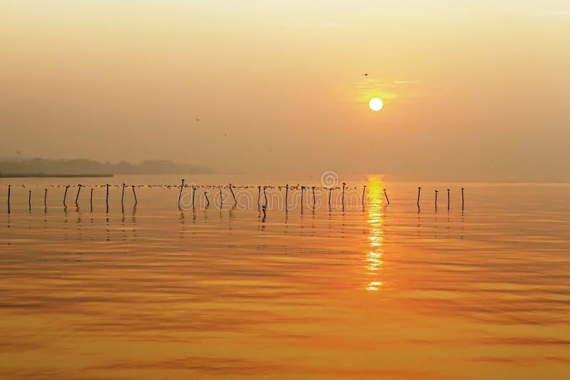 Sunrise with seagul royalty free stock image