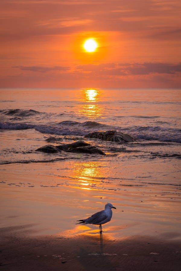Free Sunrise Seagull Stock Photos - 67656173
