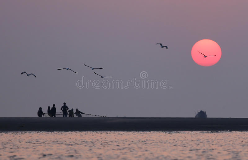 Sunrise on seashore with flying birds. In Kuakata, Bangladesh stock photography