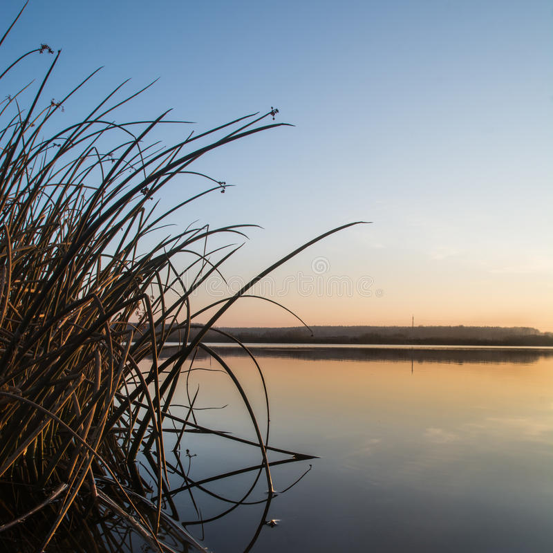 Sunrise on a shore. Of river with reeds in Ukraine.Europe. This photo can be used as a print or as a background for a post card, gift card, magazine and ect stock image