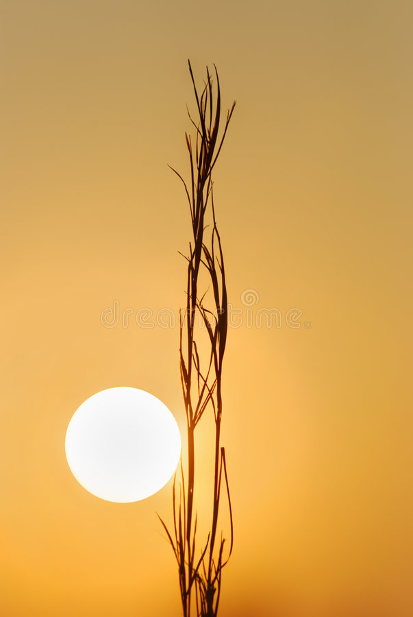Sunrise Silhouette. Warm image of the rising sun with dry grass silhouette stock photography