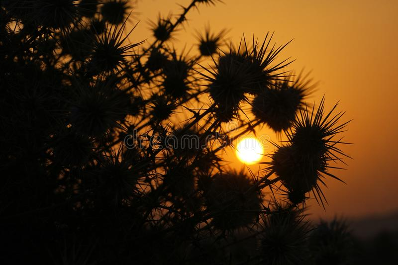 The sunrise and silhouettes of thorn bushes. The silhouettes of thorn bushes in the sunrise stock photography