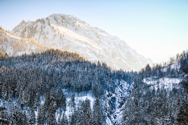 Sunrise in snowy winter mountains and woodland. Hintersteiner Tal, Allgau, Bavaria, Germany. royalty free stock photography