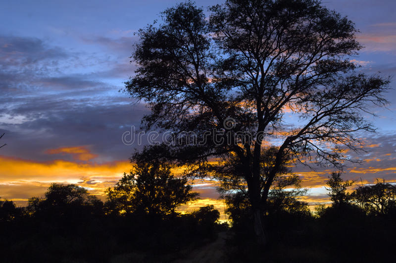 Sunrise in South Africa. Sunrise on a safari tour in South Africa stock photography