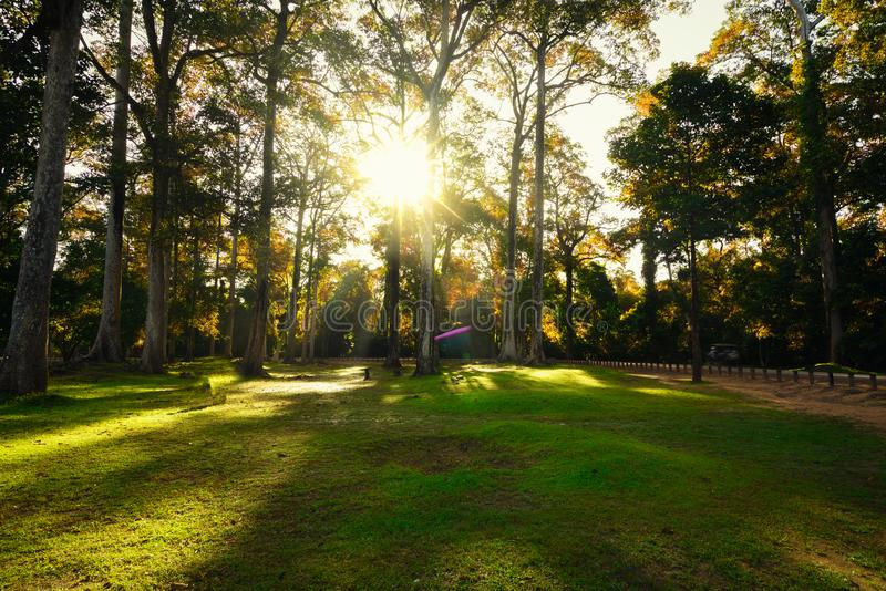 Sunrise In Spring Forest Trees. Nature Woods. Beautiful morning scene stock images