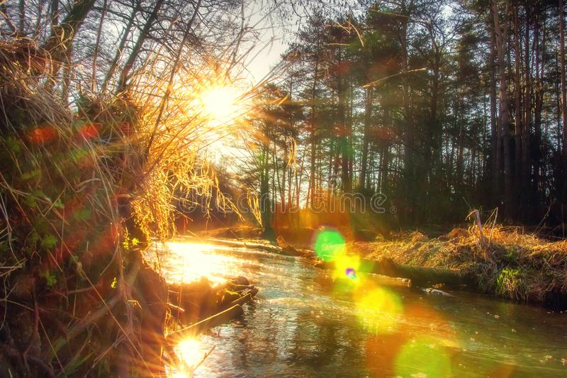 Sunrise on spring river. Wild riverside in bright sunlight at springtime stock photography