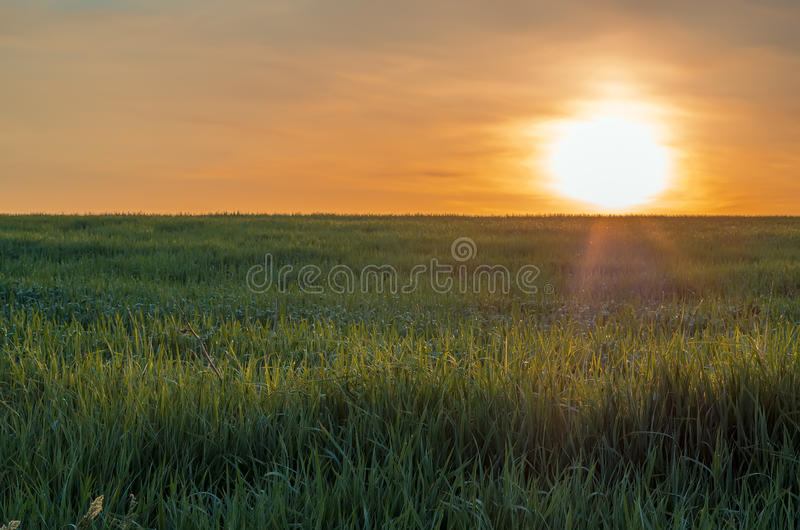 grass field sunrise. Brilliant Sunrise Download Sunrise At Spring Time On The Grass Field Stock Photo  Image Of  Green For U