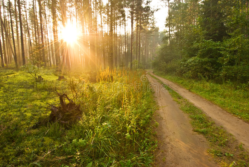 Sunrise in the spring woods stock photo
