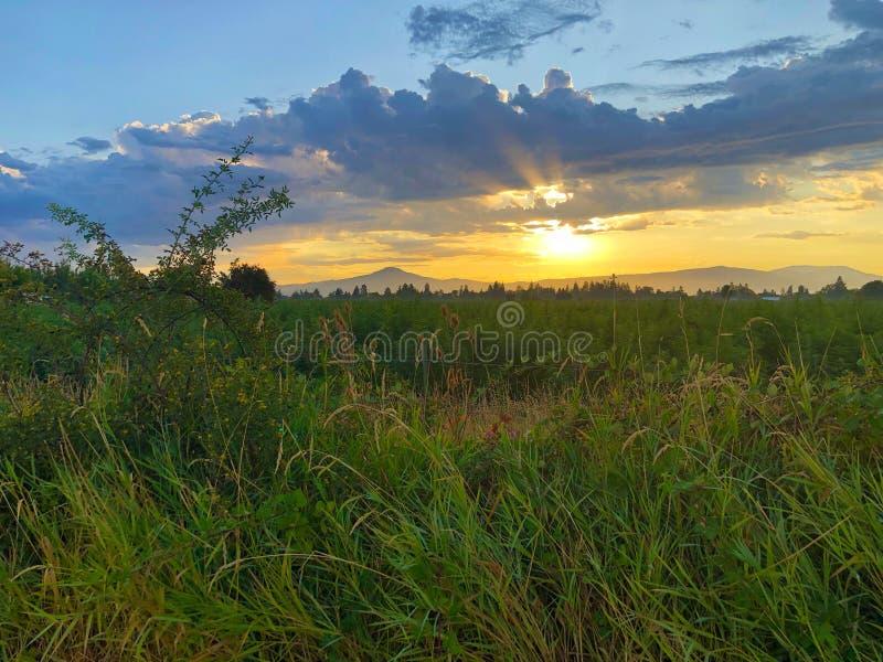 Sunrise su Hemp Field immagini stock