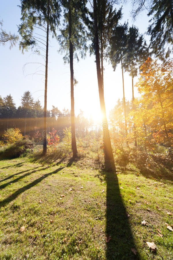 Download Sunrise stock image. Image of woodland, outdoor, trees - 33581947